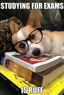 """Dog wearing glasses, head resting on books, """"Studying for exams is ruff"""""""
