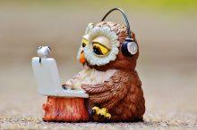 owl-947734_960_720